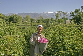 1414505462733_wps_52_Nangarhar_rose_project_fi